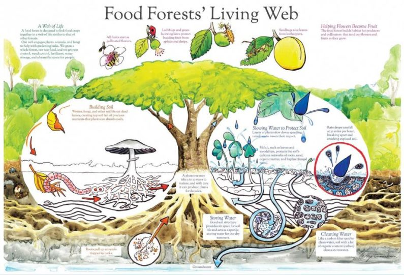 How food forests can help us build healthy, thriving, beautiful communities