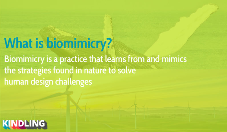 Short description of biomimicry
