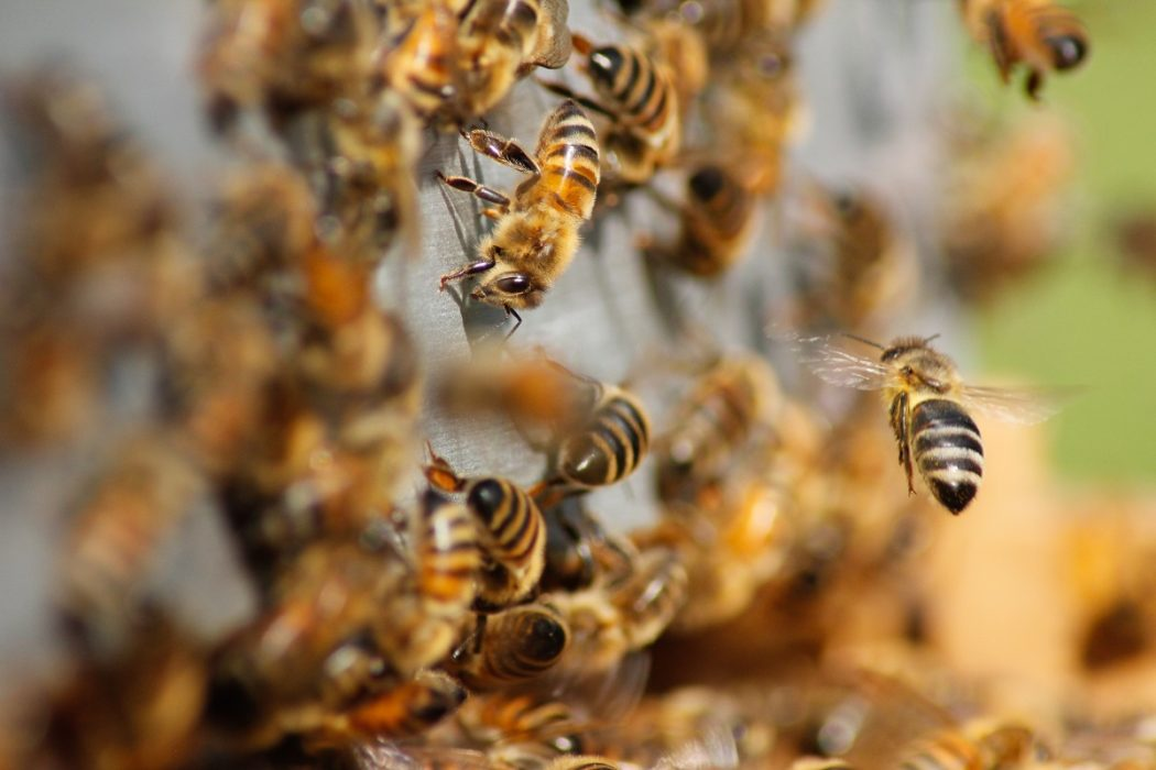 France bans two US pesticides, citing risk to bees