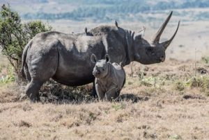 Endangered rhino numbers 'soar by 1,000%' in Tanzania after crackdown on poaching gangs