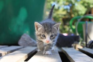 New York becomes first state to ban declawing cats