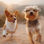 United States enacts animal cruelty bill into law, making it a federal felony