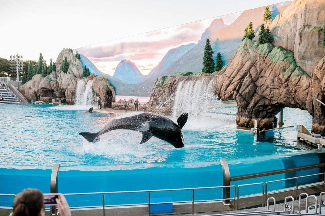 Canada bans the captivity and breeding of orcas, dolphins and other whales