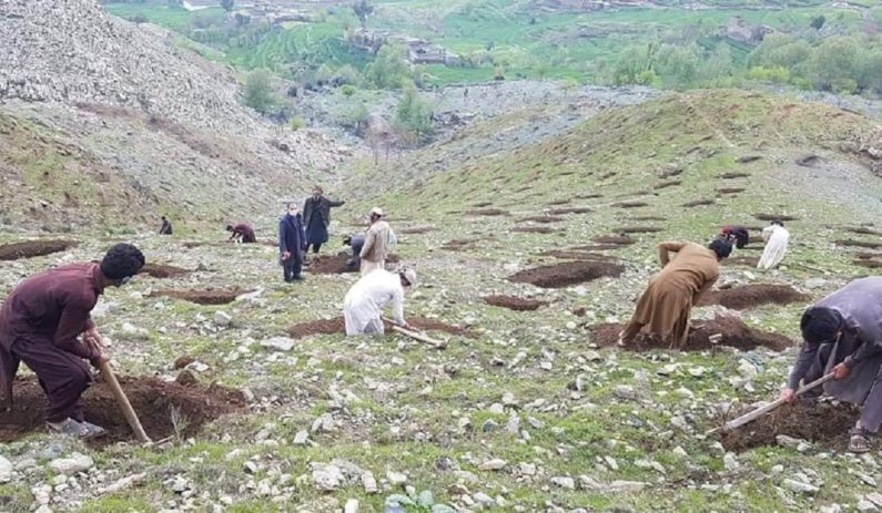 Pakistan to hire more than 60,000 workers for 10 Billion Tree Tsunami program