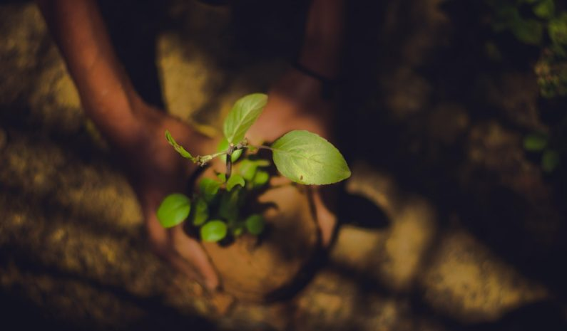 More than 2 million people in India gather to plant 250 million trees