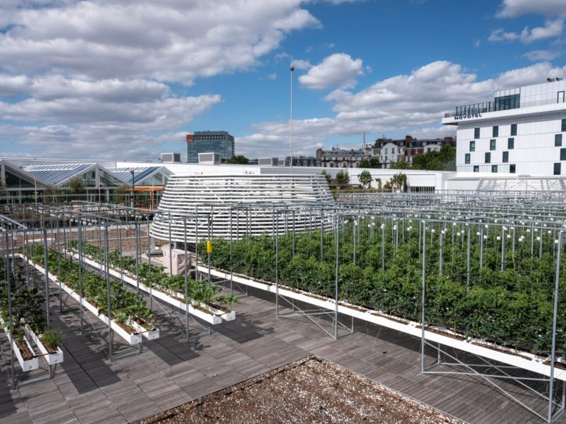 The world's biggest rooftop urban farm is now bearing fruit