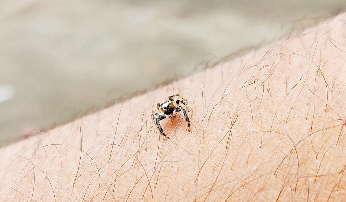 Tick or spider