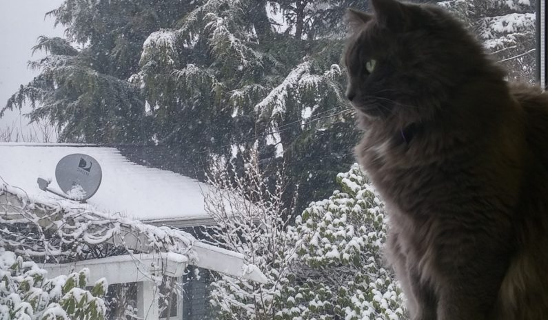 Winnie the cat looking out at snow