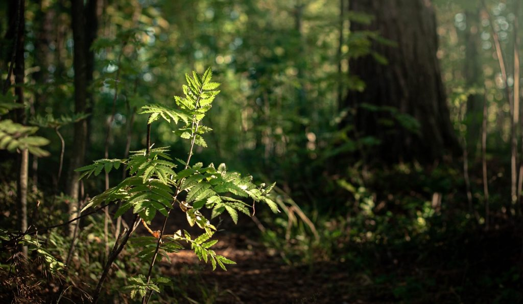 Young tree in a forest